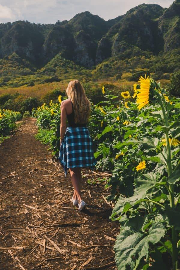 Sunflowers and Sunshine